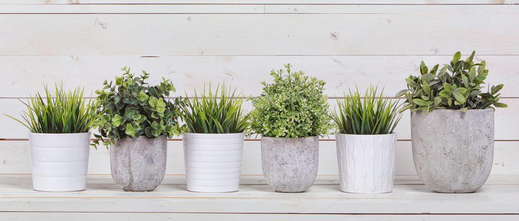 Planta-ideal